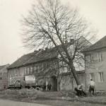 1950-59: ČSA - kácení stromů
