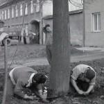1950-59: Likvidace stromů ČSA