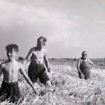 1920-50?: Zemědělství, JZD_1