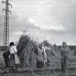 1920-50?: Zemědělství, JZD_5