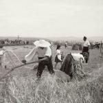 1931 srpen - Obžínky - S2120043