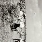1931 srpen - Obžínky - S2120046