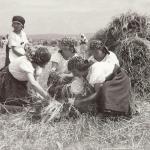 1931 srpen - Obžínky - S2120051