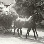1931 srpen - Obžínky - S2120072