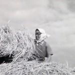 1920-50?: Zemědělství, JZD_2