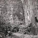1950?: Park
