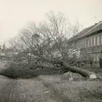 1960-69: ČSA - kácení stromů
